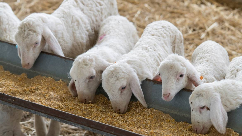 4 καλές πρακτικές στο σχεδιασμό και τη διαχείριση της εκτροφής